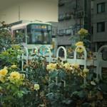 Rose & Tram